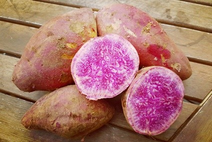 bio süßkartoffel kaufen