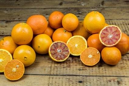 Bio Orangen kaufen