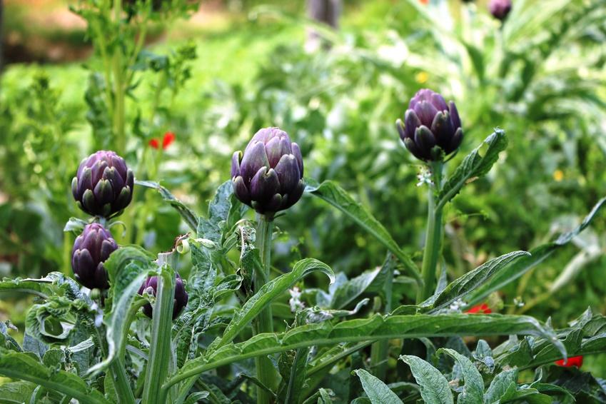 Bio Stiel-, Blüten-, & Blattgemüse