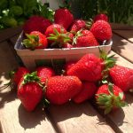 Erdbeeren Bayern 500g