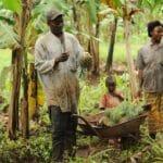 fair trade früchte