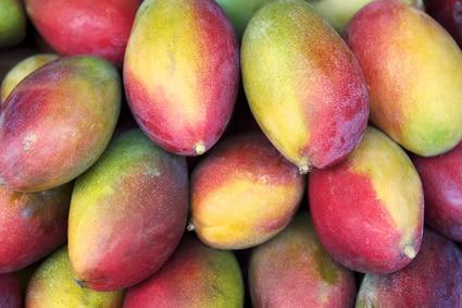 Bio Baumbox Mangos