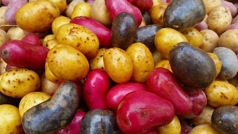 Bunte Kartoffeln kaufen