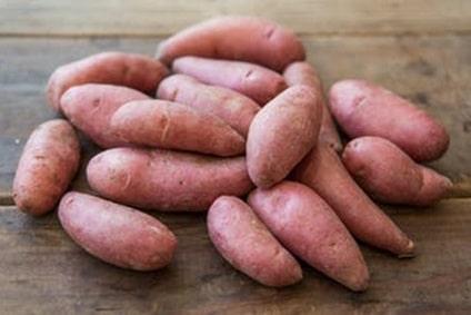 bio kartoffel rosa zapfen
