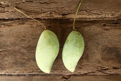 bio mango wild