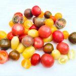 tomaten raritäten kaufen