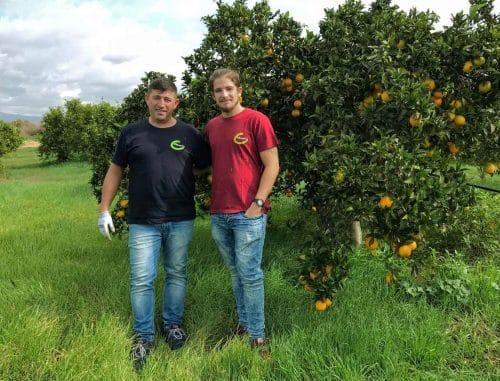 Clementinen frisch vom Erzeuger