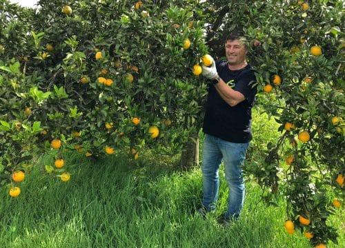 clementinen bestellen