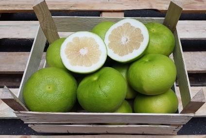 grapefruit sweetie kaufen