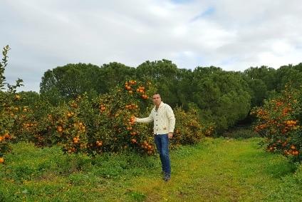 nadorcott clementinen kaufen