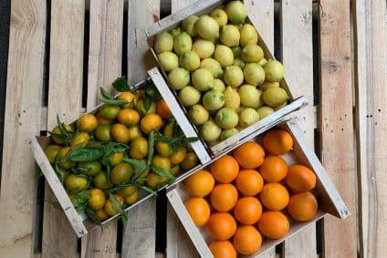 bio Zitrusfrüchte kaufen
