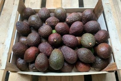 bio avocado hass bestellen