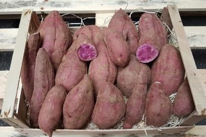 süsskartoffel violett kaufen