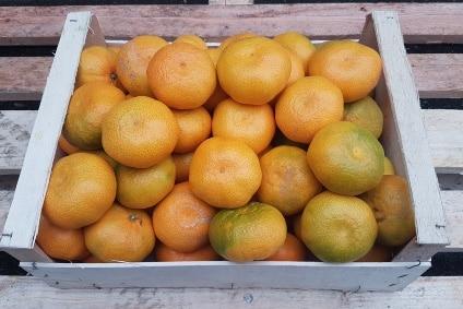 Bio Baumbox Mandarine Satsumas