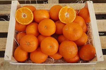 bio mandarinen direkt vom Erzeuger kaufen