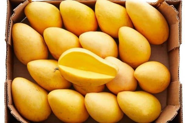 bio mango ataulfo kaufen