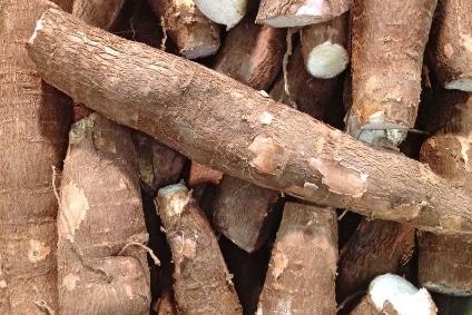 maniok kaufen