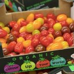 bio tomaten bunt