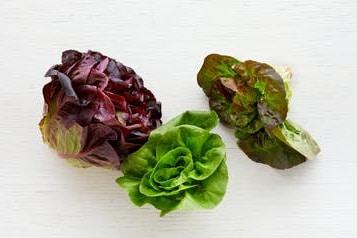 salanova bestellen