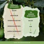 avocados vom erzeuger kaufen