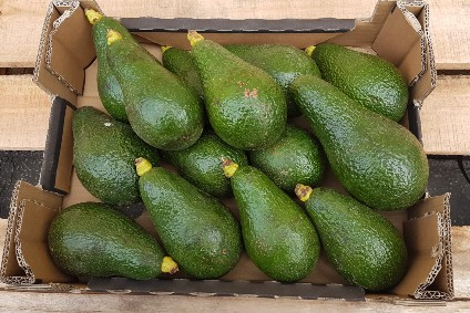 Avocado Insana Box (wild)