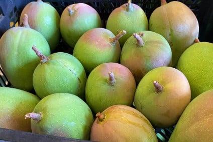 kensington mango kaufen