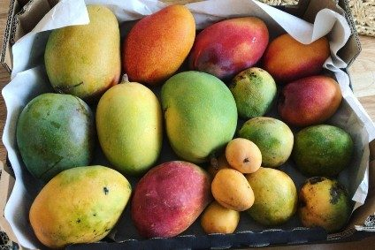 mango wild mixed box