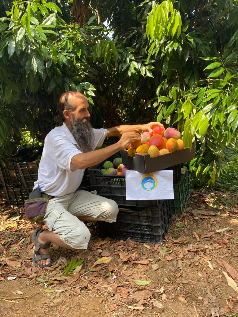 mango spanien kaufen vom erzeuger