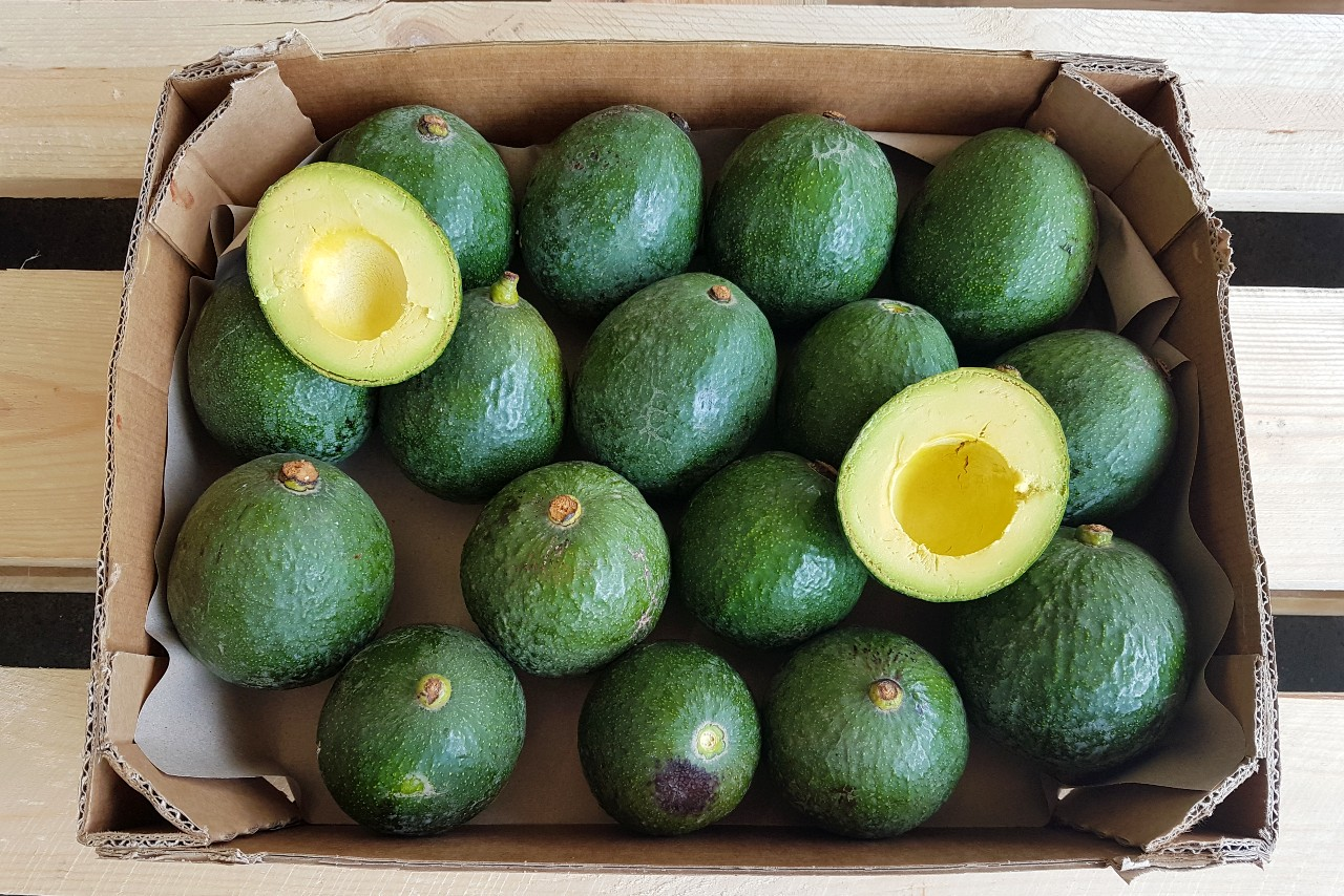 reed avocado kaufen