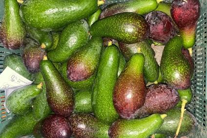 avocado wild kaufen