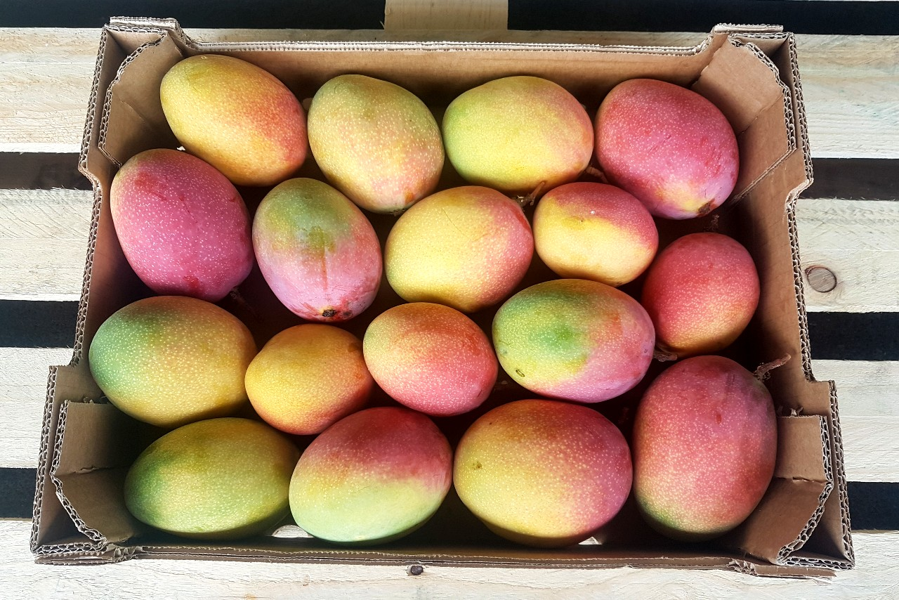mango haden bestellen