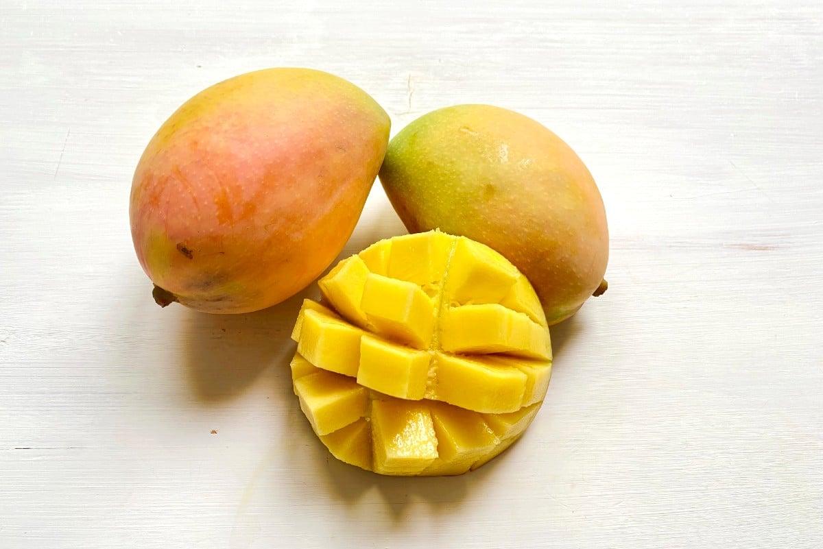 mango kensington bestellen