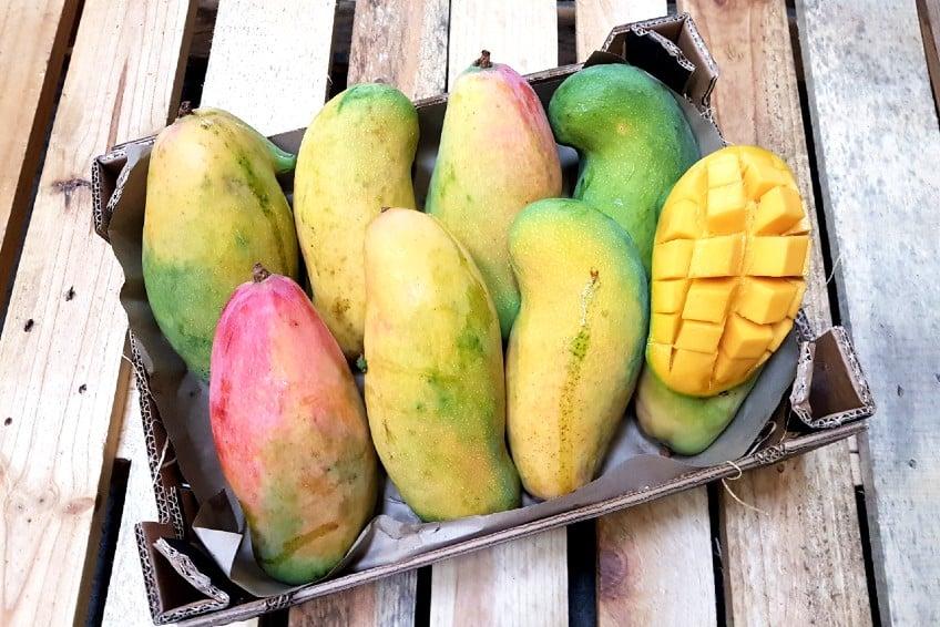 mango spanien kaufen