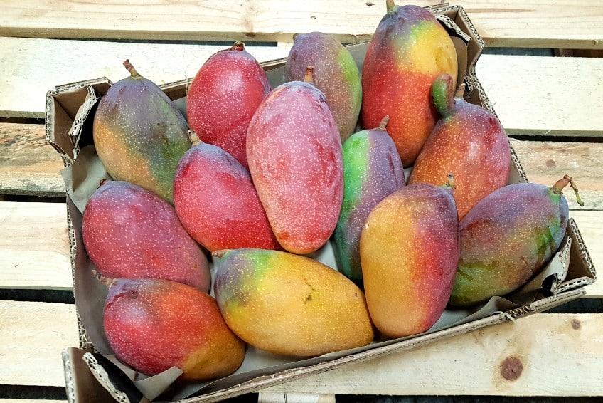bio mango aus spanien kaufen