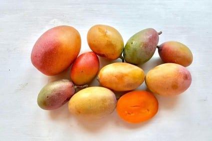 mini mangos kaufen