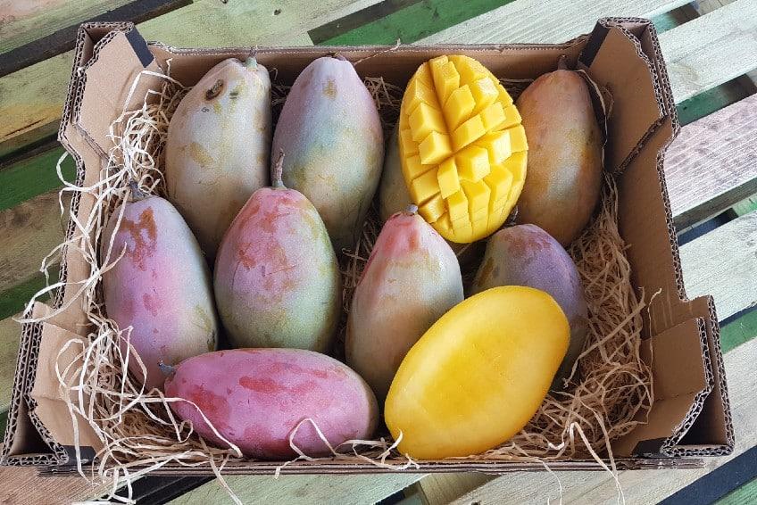 mangos kaufen spanien