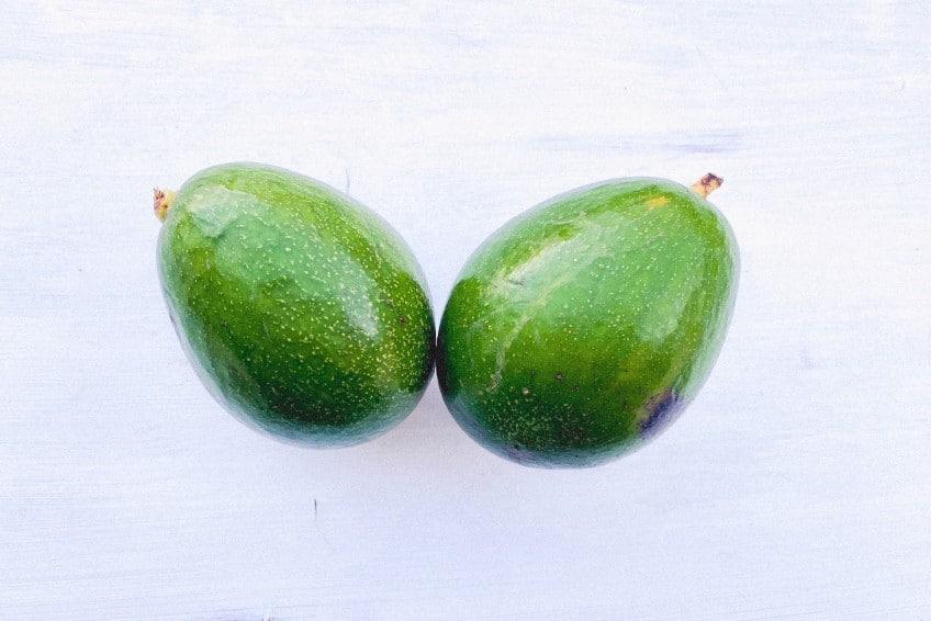 avocado antillano