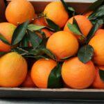 bio orangen vom erzeuger kaufen