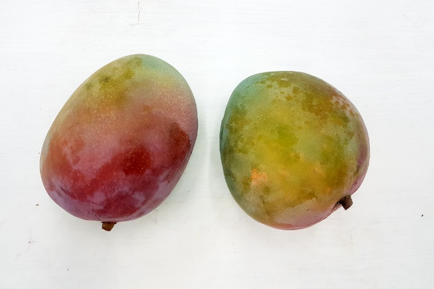 kent mango bestellen