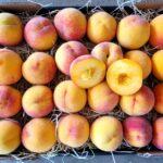 pfirsiche direkt vom erzeuger kaufen