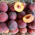 pfirsiche rot kaufen