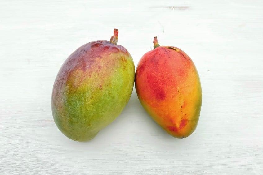 mangos direkt vom erzeuger kaufen