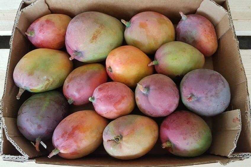 mango kaufen