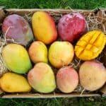 mangos vom erzeuger kaufen