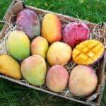 bio mango kaufen