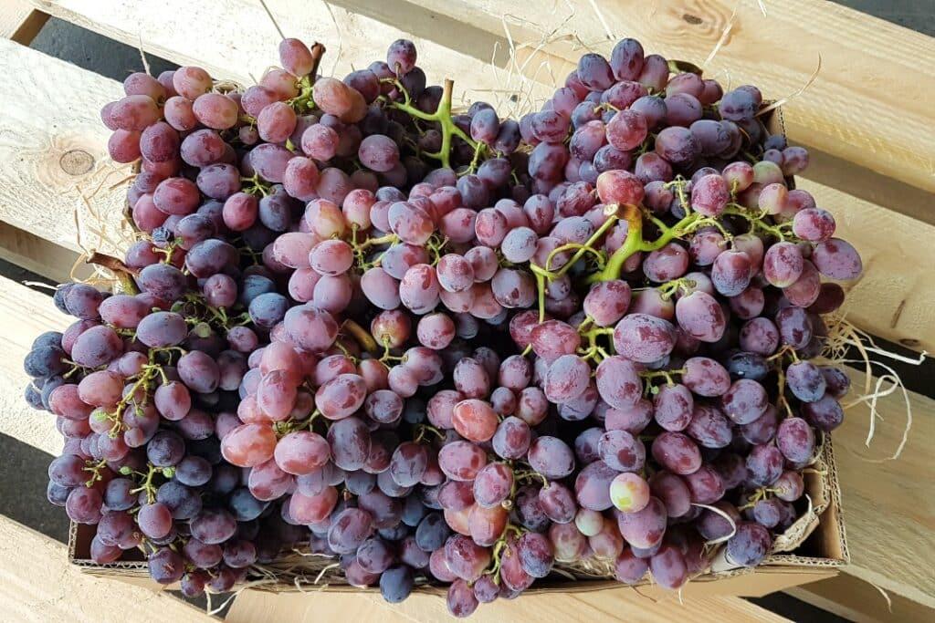 bio trauben vom erzeuger kaufen