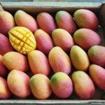 Mango Irwin kaufen