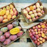 bio mangos aus spanien kaufen