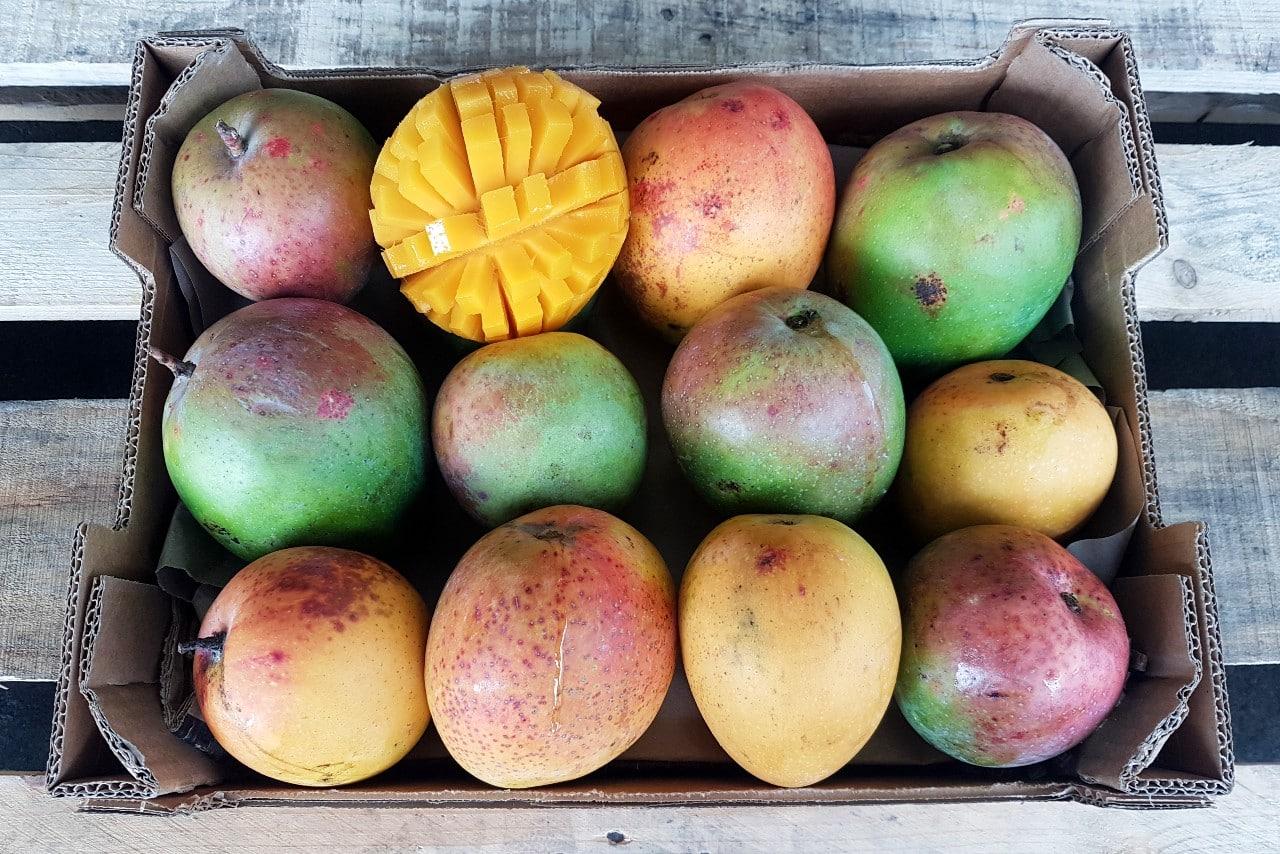 bio mango lippens bestellen