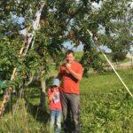 bio äpfel regional kaufen
